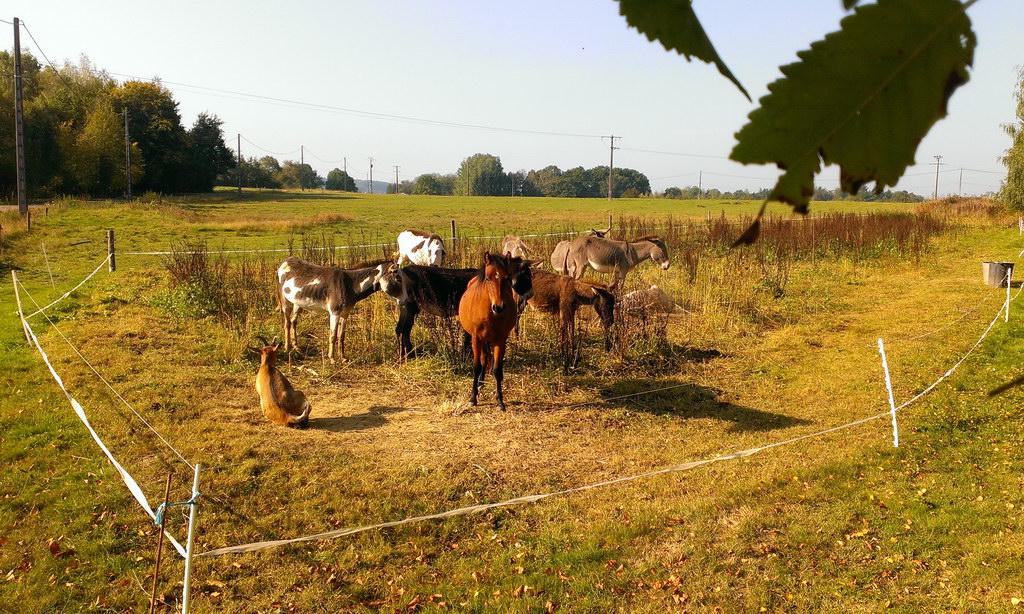 Esel in Frankreich - Zigeunerwagen-Ferien