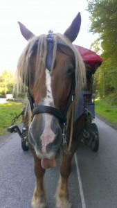 Linotte zieht den Zigeunerwagen