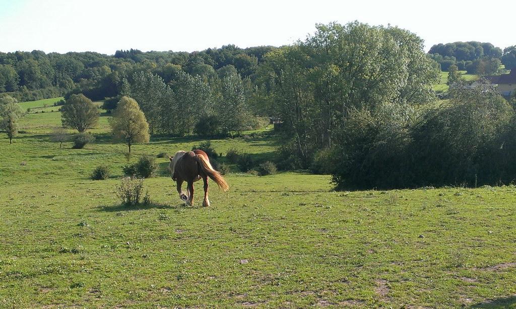 Abschlied von Zigeunerwagen und Pferd