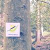 Spessartbogen von Bad Orb nach Mernes