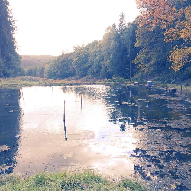 Spessartbogen Bad Orb - Teich