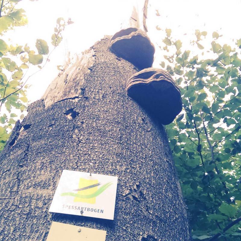 Spessartbogen von Langenselbold - Schilder am Baum mit Pilz