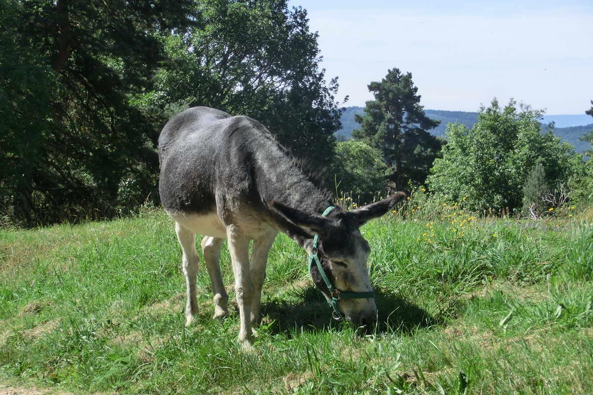 Mit dem Esel wandern - Mirabelle