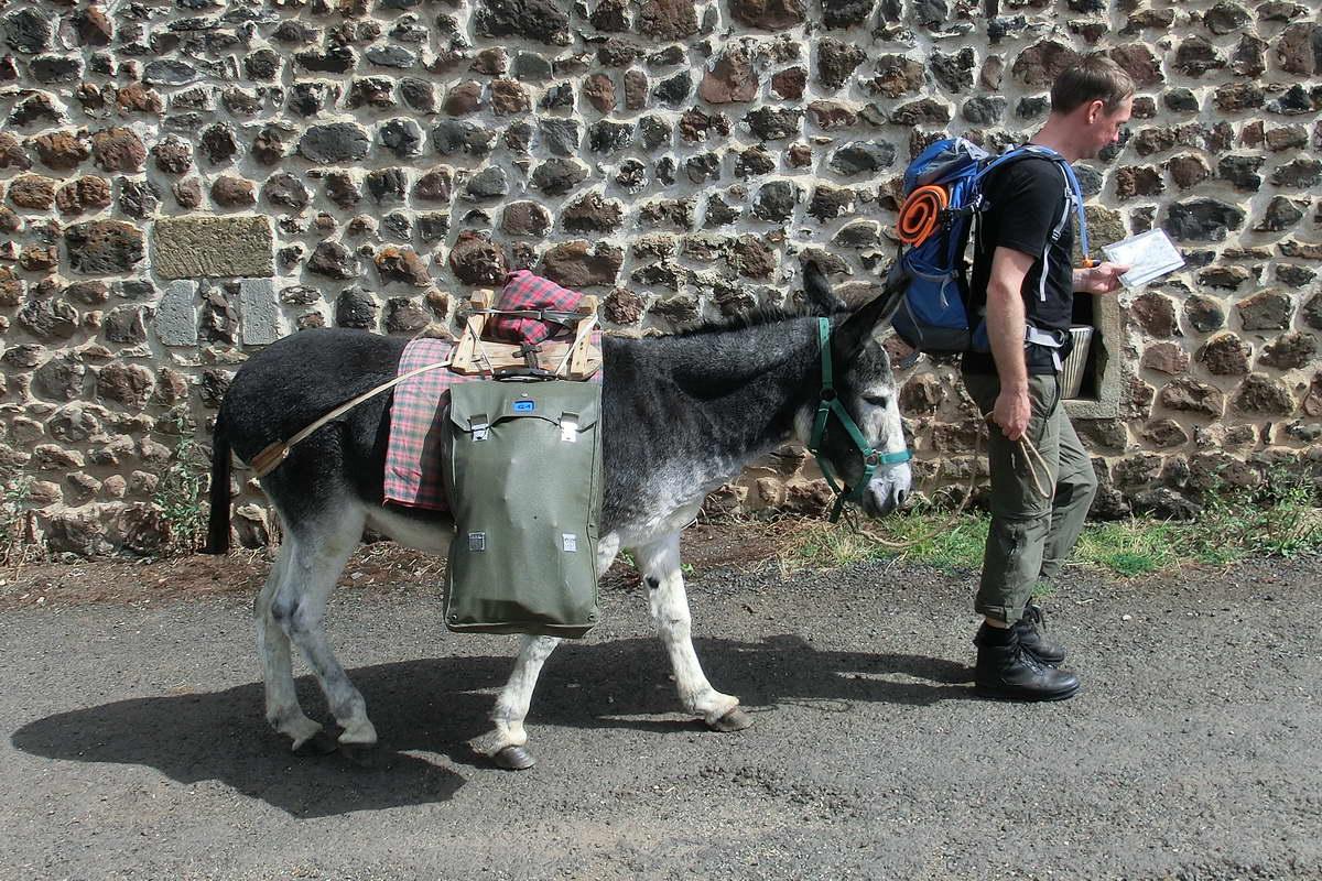 Mit dem Esel wandern - sind wir richtig